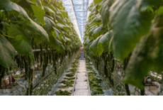 В регионе будет создан центр компетенций в сфере сельхозкооперации и поддержки фермеров