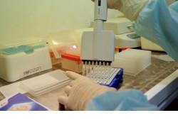 Каждый случай ОРВИ должен быть протестирован на коронавирус