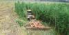 Конструкторы ПТЗ создали комплект защиты при возделывании залежных земель для тракторов «Кировец» К-7М